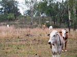 Lot 1342, Hansford Road, Meringandan, Qld 4352