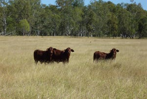 'Westfield' Duaringa-Biloela Road, Gainsford, Qld 4702
