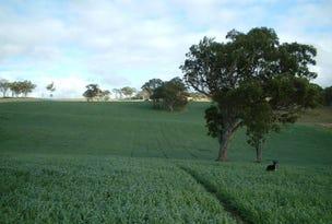 1167 Black Swamp Road, Tenterfield, NSW 2372