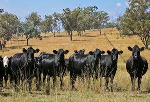 Murrumbo, Bylong, NSW 2849