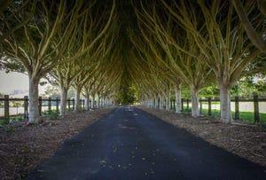 246 Martins Lane, Knockrow, NSW 2479