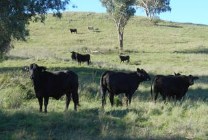 Crow Mountain Road, Barraba, NSW 2347