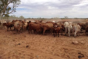 Pastoral Lease Cobra Dairy Creek Road, Gascoyne Junction, WA 6705