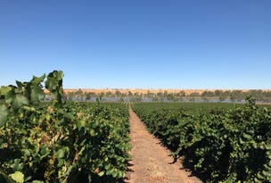 Punyelroo Vineyard, 135 Fleet Road, Punyelroo, SA 5353