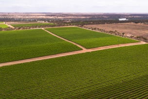 Byrne Wine Group, Murraylands Road, Morgan, SA 5320
