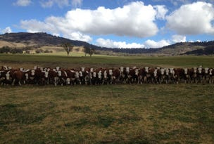 Rangers Valley, Nundle, NSW 2340
