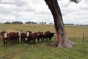 167 Nutshell Road, Tenterfield, NSW 2372