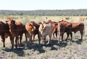 Wilga Downs, Emerald, Qld 4720