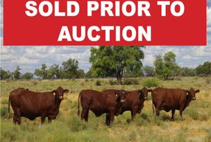 28525 Kamilaroi Highway, Burren Junction, NSW 2386
