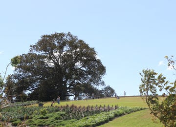 Emerald Hills Estate - Land Release Leppington
