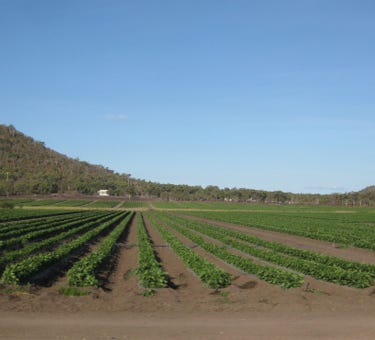 Large Scale Horticultural Enterprise, Large scale horticultural enterprise, Bowen, Qld 4805