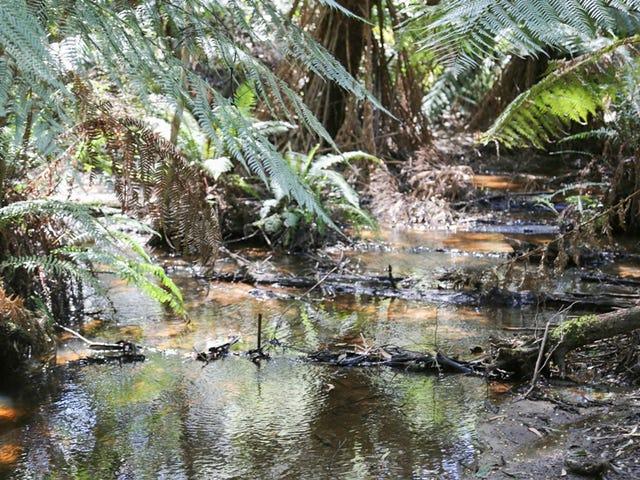 1314 Mawbanna Road, Mawbanna, Tas 7321