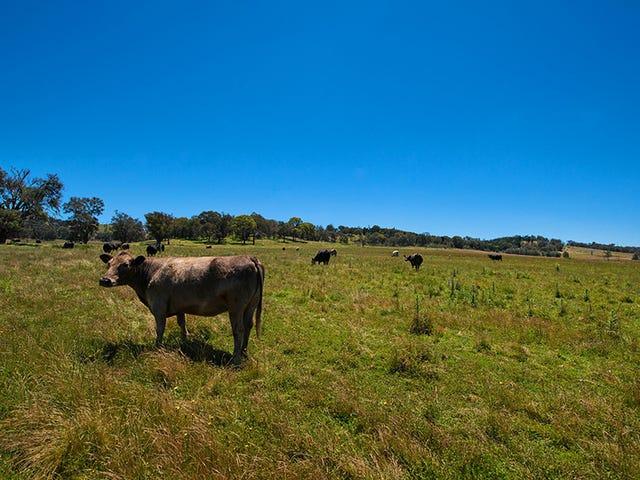 3, 769 Black Springs Road, Mudgee, NSW 2850