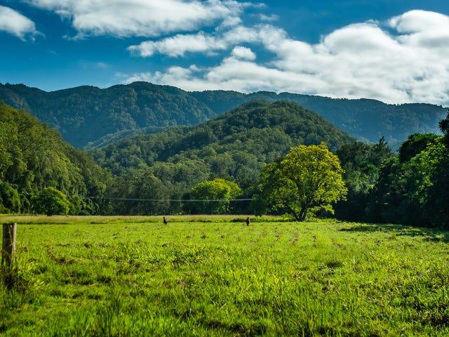 1627 Darkwood Road, Bellingen, NSW 2454