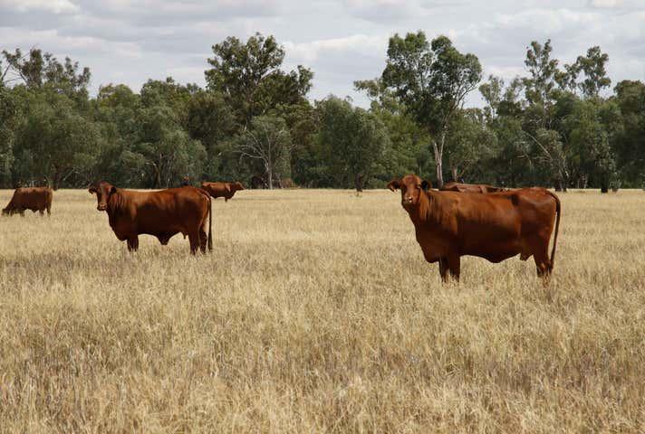 Quandialla NSW 2721 - Image 1