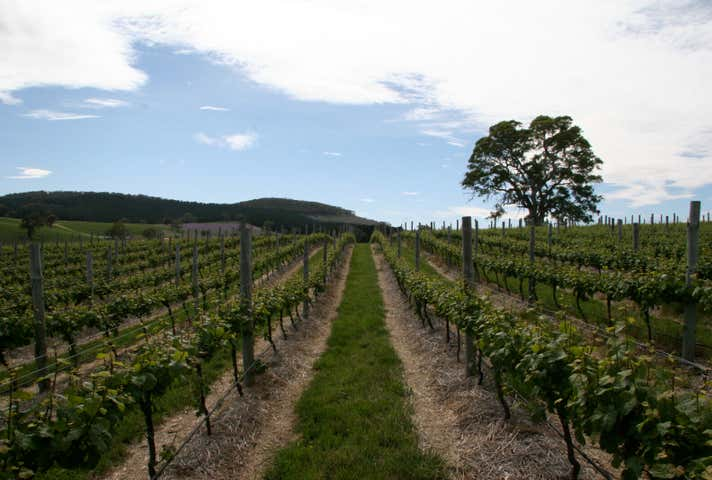 Domain Day Vineyard Lot 349 Springton Road Williamstown SA 5351 - Image 1