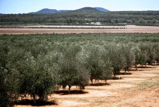 Eden Valley Olives, 4335 Mellburra Road Bellata NSW 2397 - Image 1