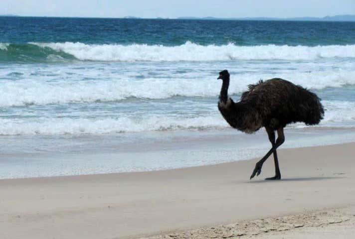 Bribie Island North QLD 4507 - Image 1