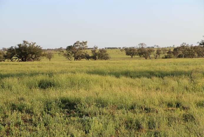 Adavale Road Blackall QLD 4472 - Image 1