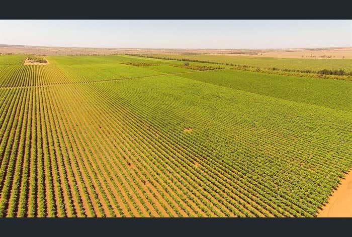 Thurla Farms, Redcliffs-Meringur Road, Mildura, Vic 3500
