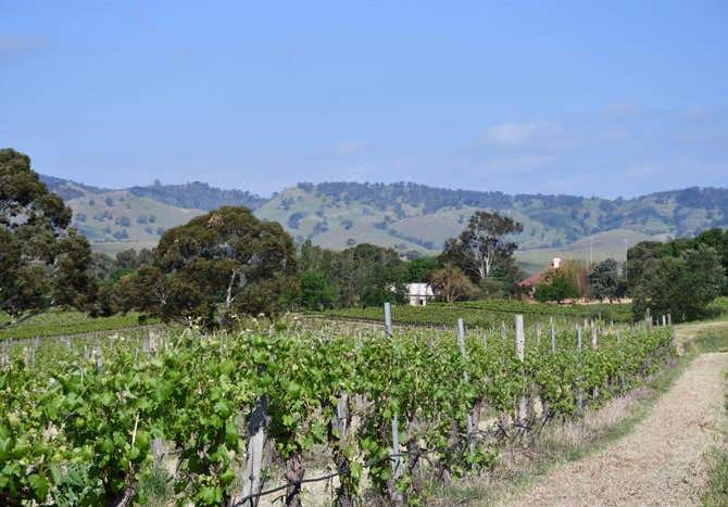Six Gates Vineyard, 1234 Barossa Valley Way Lyndoch SA 5351 - Image 2