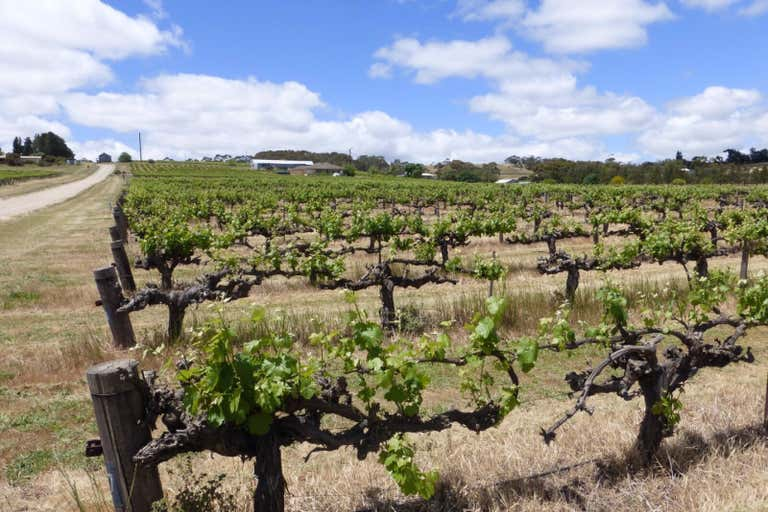 Flatview and White Hut Vineyards Horrocks Highway Stanley Flat SA 5453 - Image 2
