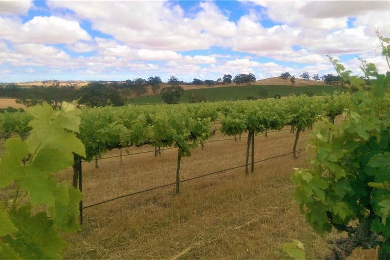 Flatview and White Hut Vineyards Horrocks Highway Stanley Flat SA 5453 - Image 4