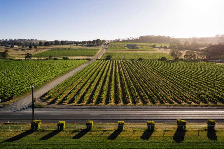 Flatview and White Hut Vineyards Horrocks Highway Stanley Flat SA 5453 - Image 1