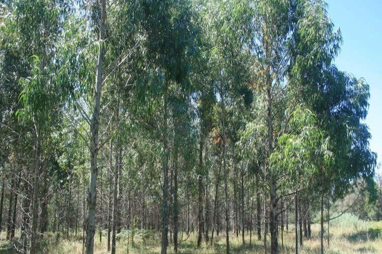 Walcha NSW 2354 - Image 4