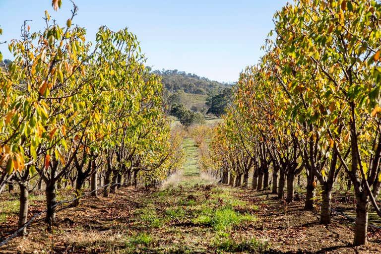 Kersbrook Cherry Farm , 1718  South Para Road Kersbrook SA 5231 - Image 4